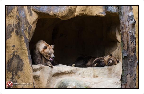 dierentuin amersfoort-1-6862-19102014