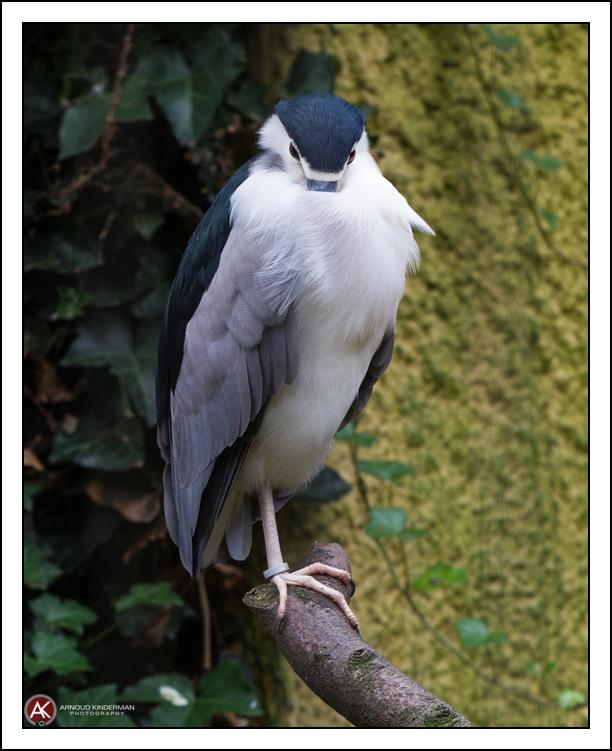 dierentuin amersfoort-3-6876-19102014