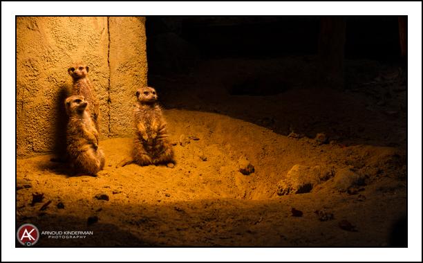 dierentuin amersfoort-6--19102014