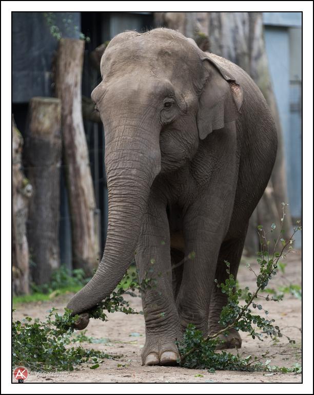 dierentuin-6-8909-13082016