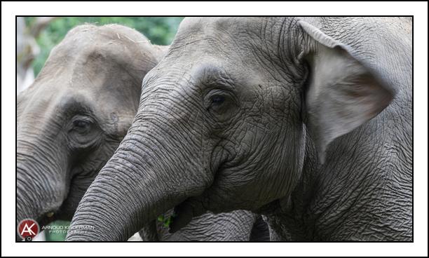 dierentuin-7-8912-13082016