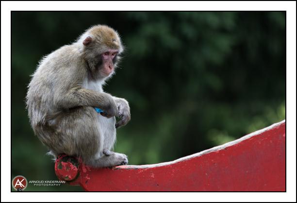 dierentuin-8-8913-13082016